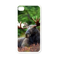 Majestic Moose Apple Iphone 4 Case (white) by StuffOrSomething