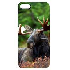 Majestic Moose Apple Iphone 5 Hardshell Case With Stand by StuffOrSomething