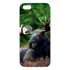 Majestic Moose Apple Iphone 5 Premium Hardshell Case by StuffOrSomething