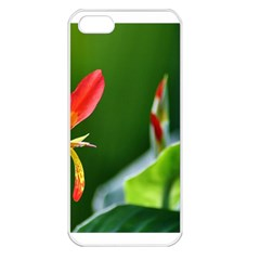 Lily 1 Apple iPhone 5 Seamless Case (White) by Cardsforallseasons