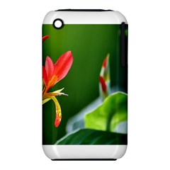 Lily 1 Apple Iphone 3g/3gs Hardshell Case (pc+silicone)