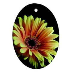 Yellow Orange Gerbera Daisy Oval Ornament (two Sides)
