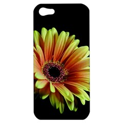 Yellow Orange Gerbera Daisy Apple Iphone 5 Hardshell Case by bloomingvinedesign