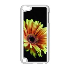 Yellow Orange Gerbera Daisy Apple Ipod Touch 5 Case (white) by bloomingvinedesign