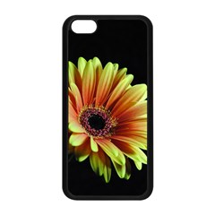 Yellow Orange Gerbera Daisy Apple Iphone 5c Seamless Case (black) by bloomingvinedesign