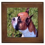 boxer Framed Tile