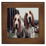 basset hounds two Framed Tile