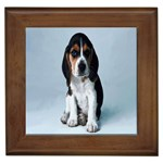 Basset hound puppy Framed Tile