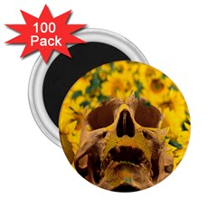 Sunflowers 2 25  Button Magnet (100 Pack) by icarusismartdesigns