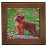 Brussels griffon Framed Tile