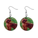 Brussels griffon 1  Button Earrings