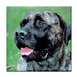 bull mastiff Tile Coaster