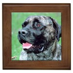 bull mastiff Framed Tile