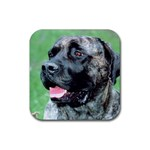 bull mastiff Rubber Square Coaster (4 pack)