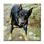 doberman pinscher Tile Coaster