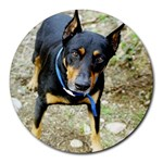 doberman pinscher Round Mousepad