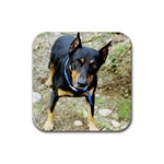 doberman pinscher Rubber Square Coaster (4 pack)