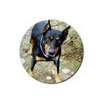 doberman pinscher Rubber Round Coaster (4 pack)