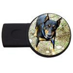 doberman pinscher USB Flash Drive Round (4 GB)