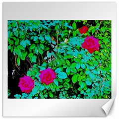 Rose Bush Canvas 12  X 12  (unframed) by sirhowardlee