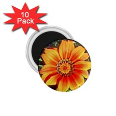 Flower In A Parking Lot 1.75  Button Magnet (10 pack) by sirhowardlee