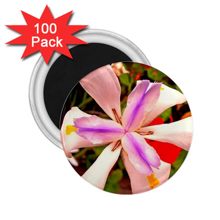 African Iris 2.25  Button Magnet (100 pack)