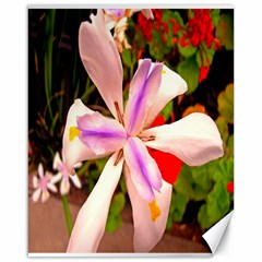 African Iris Canvas 16  X 20  (unframed) by sirhowardlee