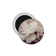 White Rose Vintage Style Photo In Ocher Colors 1 75  Button Magnet by dflcprints