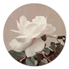White Rose Vintage Style Photo In Ocher Colors Magnet 5  (round) by dflcprints
