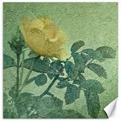 Yellow Rose Vintage Style  Canvas 20  X 20  (unframed) by dflcprints