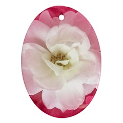 White Rose With Pink Leaves Around  Oval Ornament by dflcprints