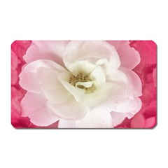 White Rose with Pink Leaves Around  Magnet (Rectangular) by dflcprints