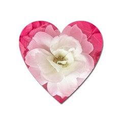 White Rose With Pink Leaves Around  Magnet (heart) by dflcprints
