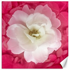 White Rose With Pink Leaves Around  Canvas 12  X 12  (unframed) by dflcprints