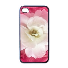 White Rose With Pink Leaves Around  Apple Iphone 4 Case (black) by dflcprints