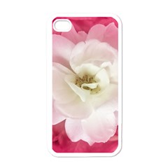 White Rose With Pink Leaves Around  Apple Iphone 4 Case (white) by dflcprints