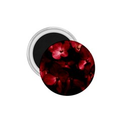 Red Flowers Bouquet In Black Background Photography 1 75  Button Magnet by dflcprints