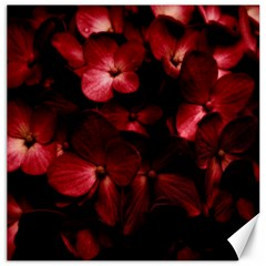 Red Flowers Bouquet In Black Background Photography Canvas 16  X 16  (unframed) by dflcprints
