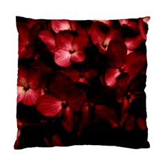 Red Flowers Bouquet In Black Background Photography Cushion Case (two Sided)  by dflcprints