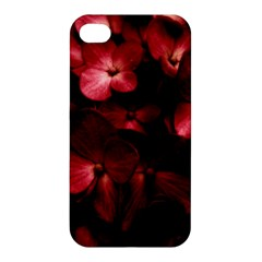 Red Flowers Bouquet In Black Background Photography Apple Iphone 4/4s Hardshell Case by dflcprints