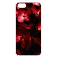 Red Flowers Bouquet In Black Background Photography Apple Iphone 5 Seamless Case (white)