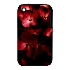 Red Flowers Bouquet In Black Background Photography Apple Iphone 3g/3gs Hardshell Case (pc+silicone) by dflcprints
