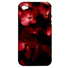 Red Flowers Bouquet In Black Background Photography Apple Iphone 4/4s Hardshell Case (pc+silicone) by dflcprints