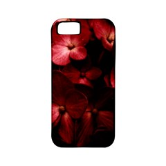 Red Flowers Bouquet In Black Background Photography Apple Iphone 5 Classic Hardshell Case (pc+silicone) by dflcprints
