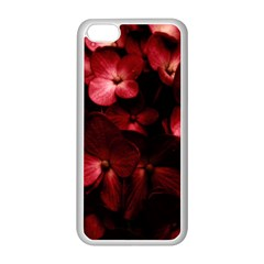 Red Flowers Bouquet In Black Background Photography Apple Iphone 5c Seamless Case (white) by dflcprints
