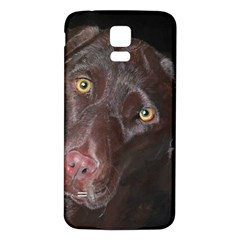 Inquisitive Chocolate Lab Samsung Galaxy S5 Back Case (White) by LabsandRetrievers