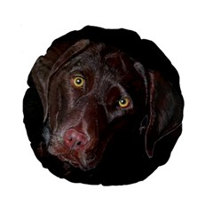 Inquisitive Chocolate Lab 15  Premium Flano Round Cushion  by LabsandRetrievers
