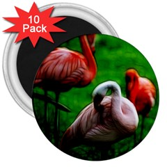 3pinkflamingos 3  Button Magnet (10 Pack) by bloomingvinedesign