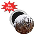 Abstract of a Cornfield 1.75  Button Magnet (10 pack) Front