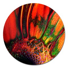 Abstract Of An Orange Gerbera Daisy Magnet 5  (round) by bloomingvinedesign